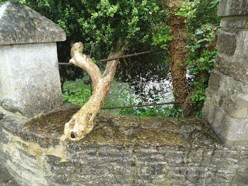treegrowinginwall